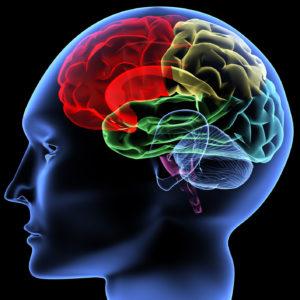 Brain_supplements