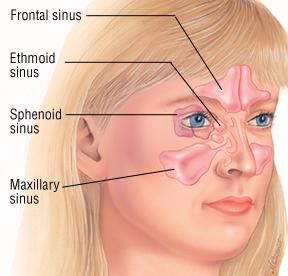 SinusBuster